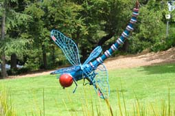 Reed Skimmer - This metallic teal dragonfly skims its way over the reeds of the pond in front of the San Rafael Falkirk Community Center.  It was designed specifically for this site as part of the Art Works Downtown project.  It currently hovers above a lovely garden in San Francisco. 5 foot Wingspan