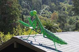 UCBG Praying Mantis - This iteration of the Praying Mantis was contracted by the University of California Botanical Gardens to overlook their magnificent landscape.  This was installed at the very beginning of an effort by the UCBG to insinuate more artworks into their gardens. 7L x 4H